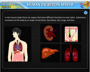 HUMAN EXCRETION SYSTEM