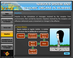 NERVOUS SYSTEM AND SENSORIC ORGANS IN HUMANS